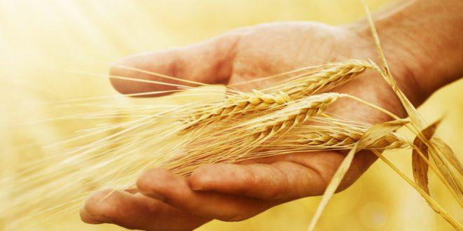 The Threshing Floor The Bottom Line Ministries